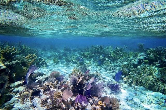 belize barrier reef adventures