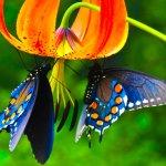 Renkli Kelebek Çocuk şarkısı