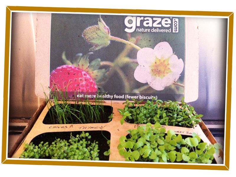 Graze Review - Herb Garden