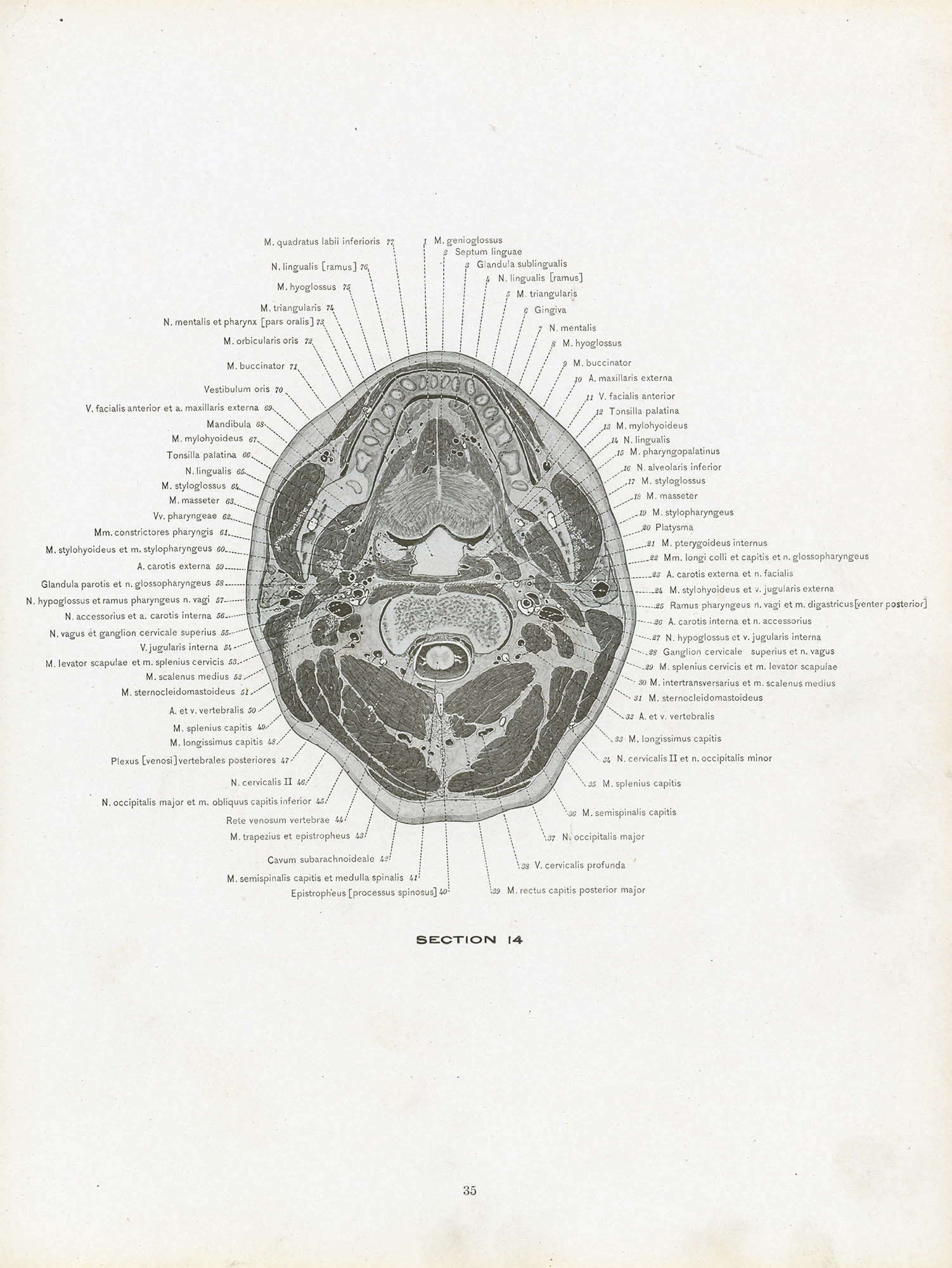 Images About Anatomical Illustration