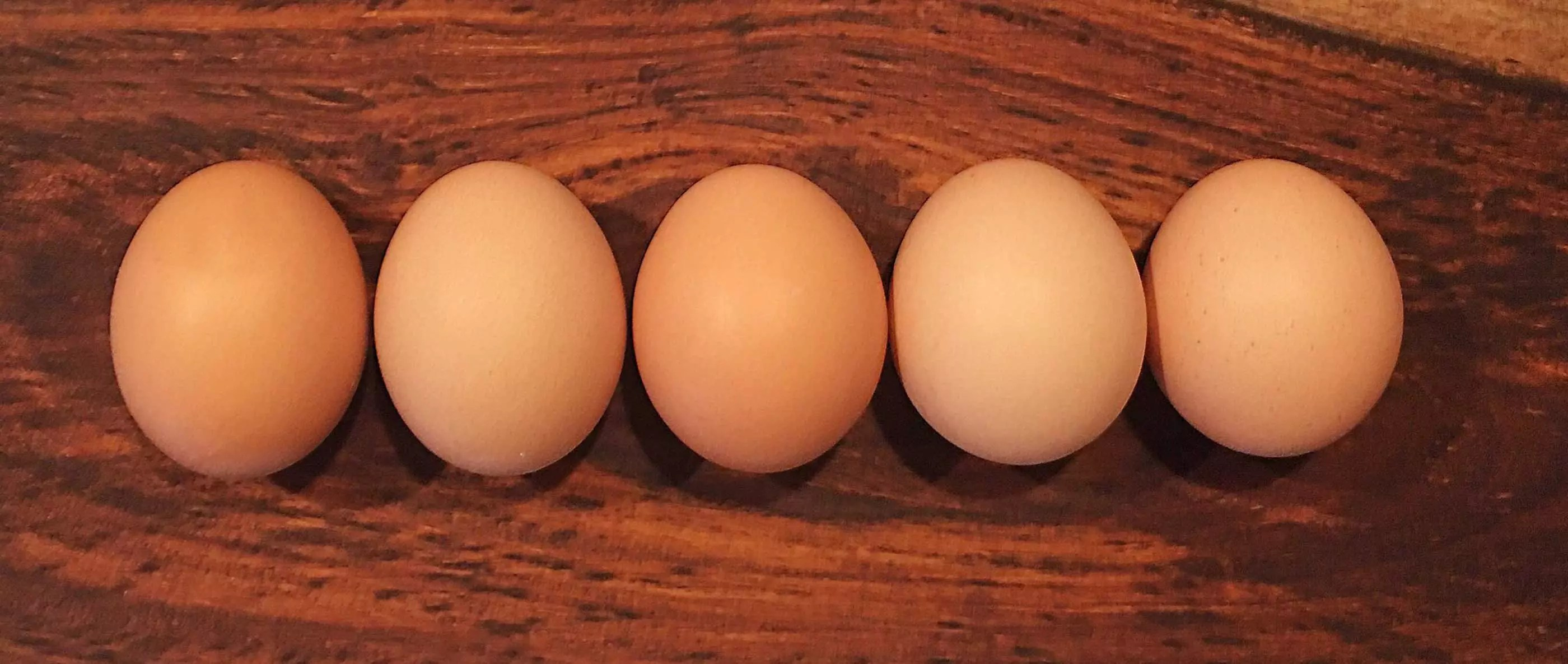 The Chicken Eggs are Coming