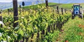 Face à la mondialisation du marché du vin, l'Europe plie mais ne rompt pas