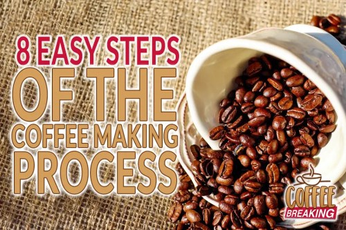8 Easy Steps Of The Coffee Making Process