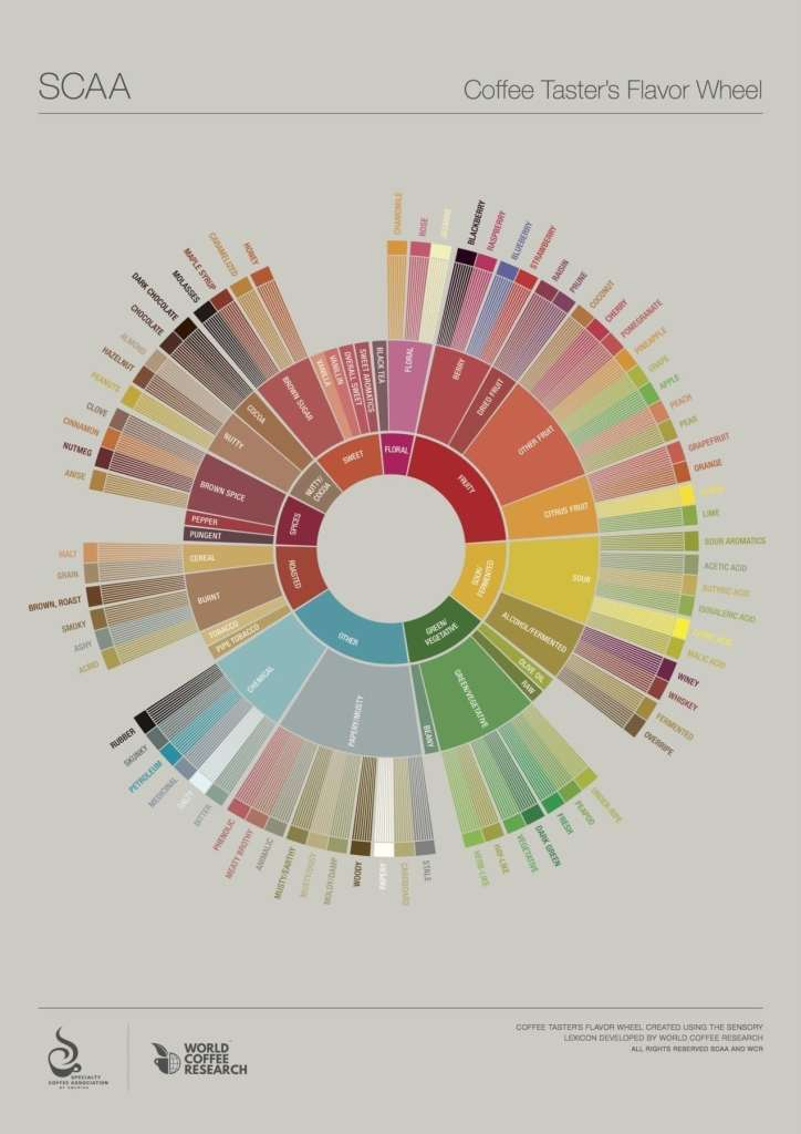 SCAA Coffee Taster's Flavor Wheel