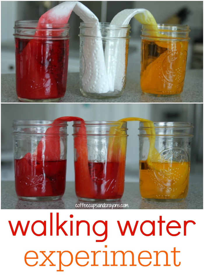 Walking Water Kids Science Experiment!