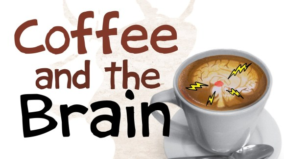 Learn How Coffee Affects The Brain