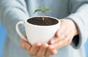 Coffee Grounds For Your Garden (Coffee Grounds For Your Garden)