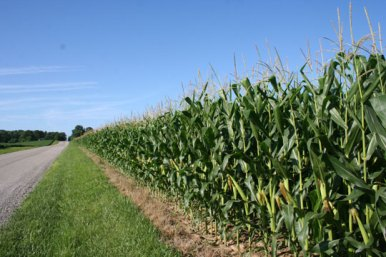 Image result for funny ohio cornfield image
