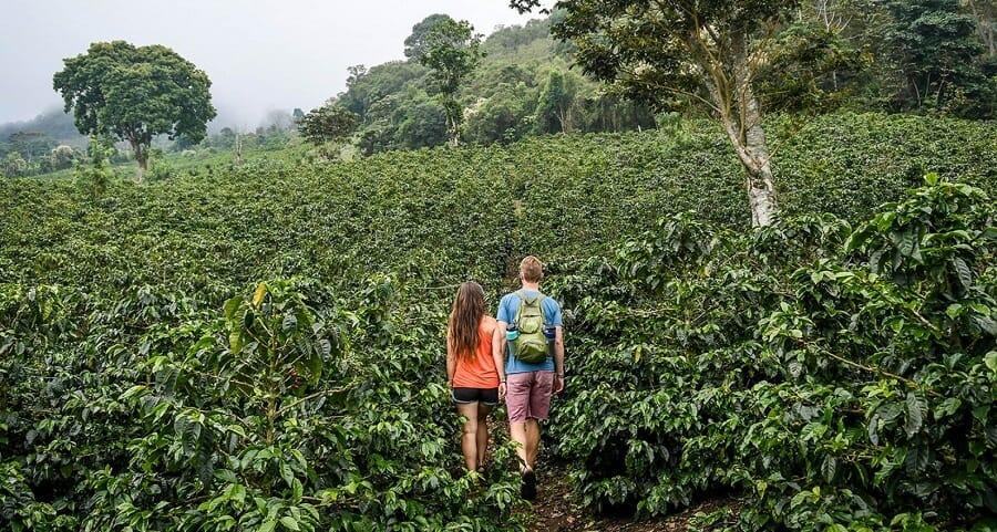 coffee farm terroir1