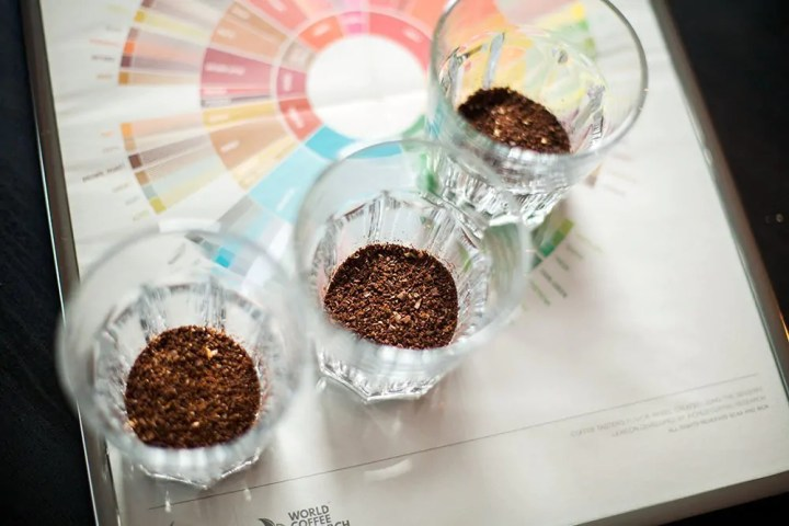 cupping flavourwheel kaffee