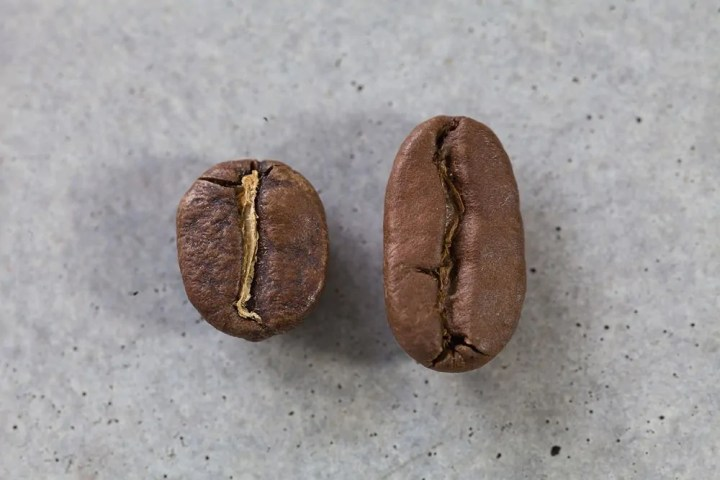 long berry kaffeebohne