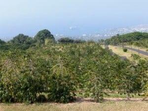 At UCC Hawaii overlooking Kailua Bay