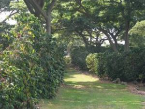 Tree shaded coffee at Island Sun