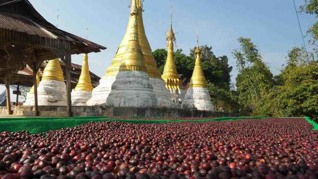 Myanmar coffee pagoda