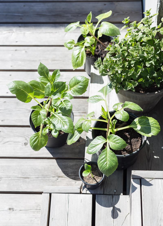 puutarhakierros, taimet ulkoilemassa
