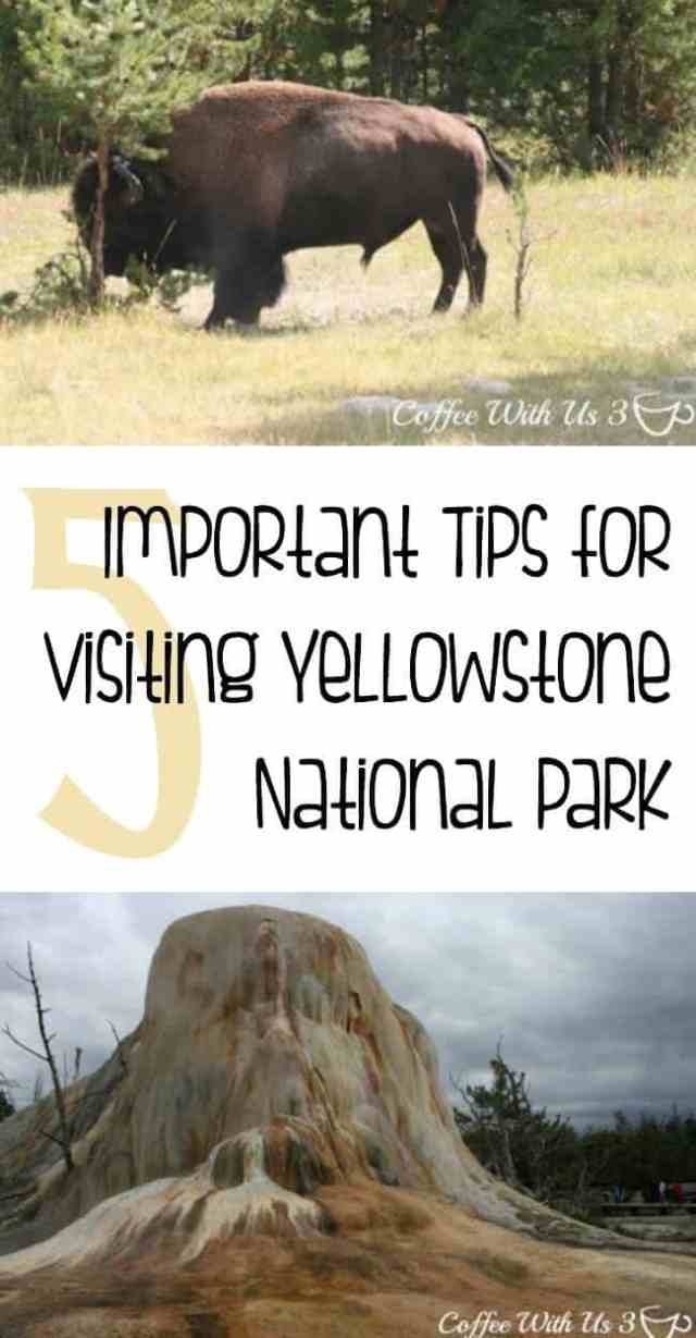 5 Important Tips for Visiting Yellowstone | Are you planning to travel to Yellowstone National Park? Make sure you know these important tips & tricks so you can stay safe, enjoy your trip, and have the best vacation ever.
