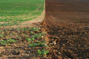 credit d'impot agriculture bio