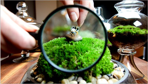 jardin miniature en pot