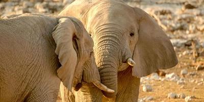 avorio_elefanti_cina