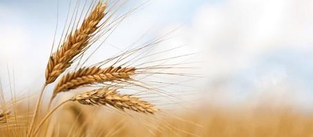 grano-siciliano