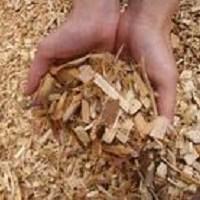 biomassse