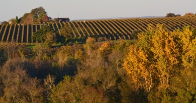Cognac Vineyard