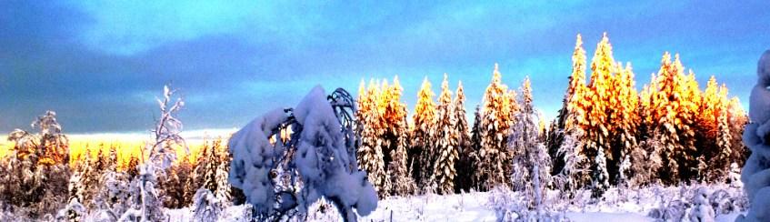 Finnland: verschneiter Waldrand, Sonnenlicht vergoldet die Baumspitzen