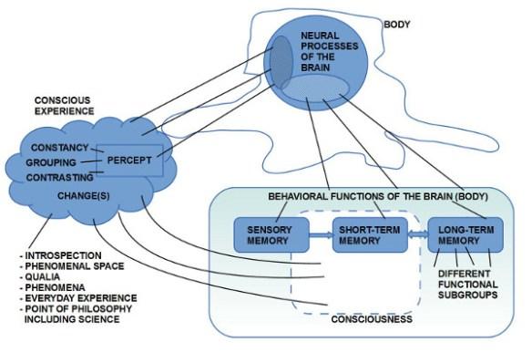 Bild 3: Korrelation zwischen Gehirn, Bewusstsein und Gedächtnis. Gedächtnis mit Sensorik, Arbeitsgedächtnis und Langzeitgedächtnis