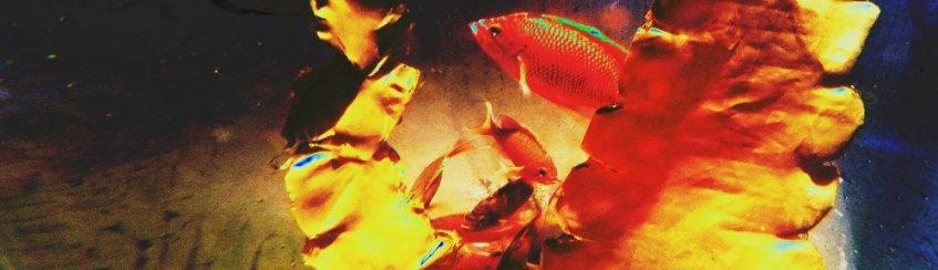 Aquarium-SeaLife-Fische-freischwebend