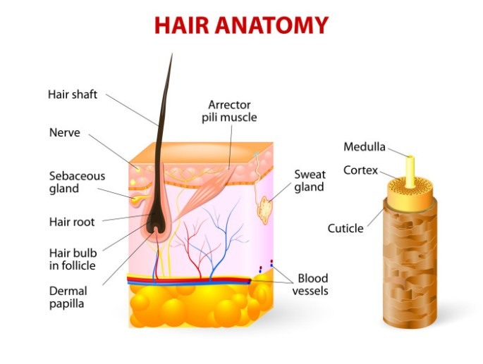 Why You Have Dry Flaky Scalp and What it Means for Natural Hair Growth