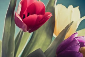 Are Bitcoin and Tulip Mania the same? No way! Here's why