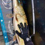 Major Fish Gants de pêche Noir XL Noir