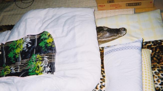 Na hora do soninho, Caiman prefere o tatame e o cobertorzinho ao tanque d'água no quintal (Caters News Agency)