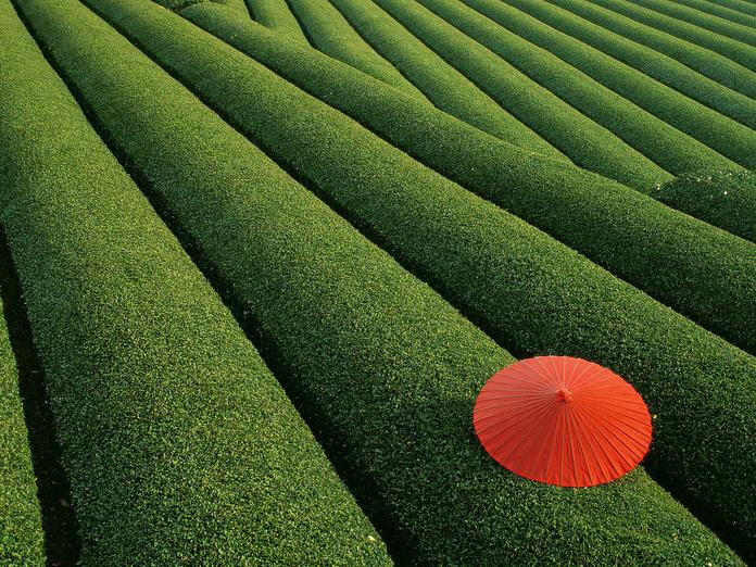 rsz_green_tea