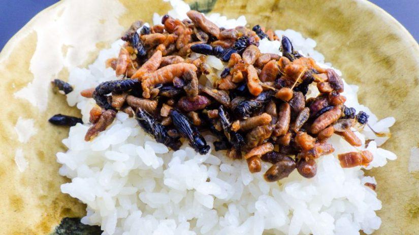 Hachinoko