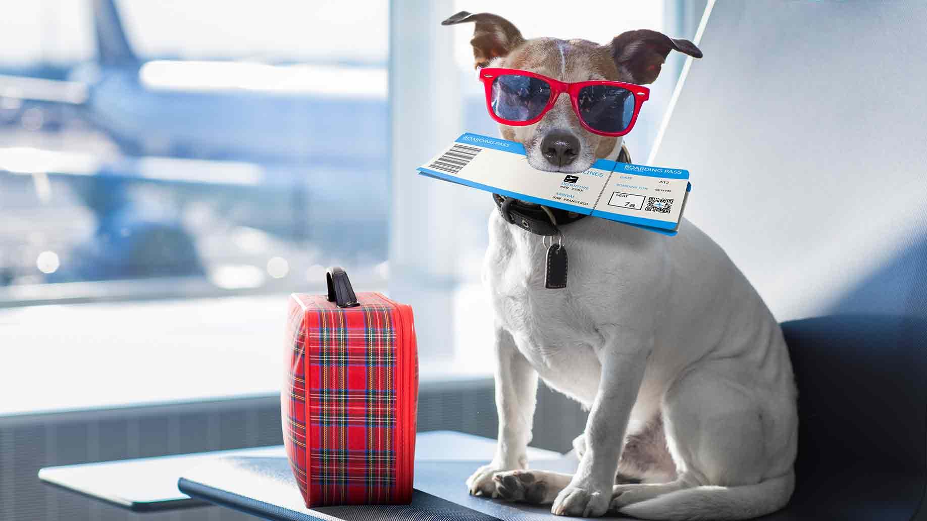 cachorro viagem Japão