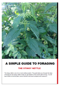 The stingy nettle