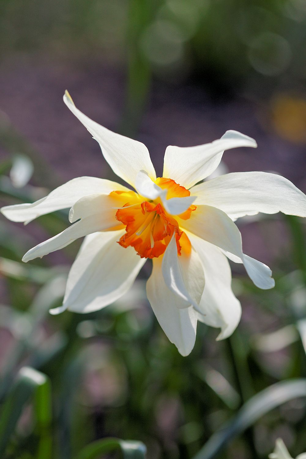 Daffodil Book Review