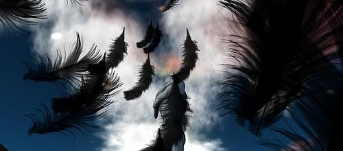 Cisnes negros por Redisgns
