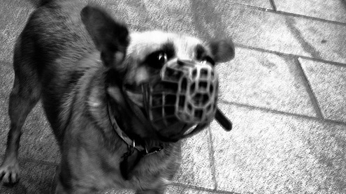 Perro por Hipnos