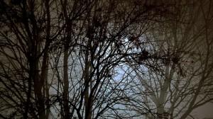 Misterio por Littlebell1984
