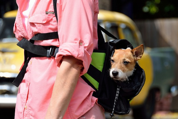Perro en bolsa por Timothy J