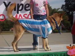 expo-mascotas-2008-66