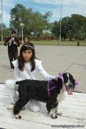 expo-mascotas-2009-161