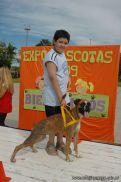 expo-mascotas-2009-221