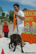 expo-mascotas-2009-265
