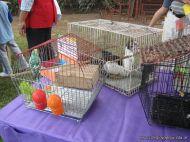expo-mascotas-2009-68