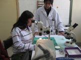 centro-de-parasitologia-28