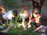 Día de Campo en el Jardín 39