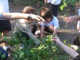 Día de Campo en el Jardín 41